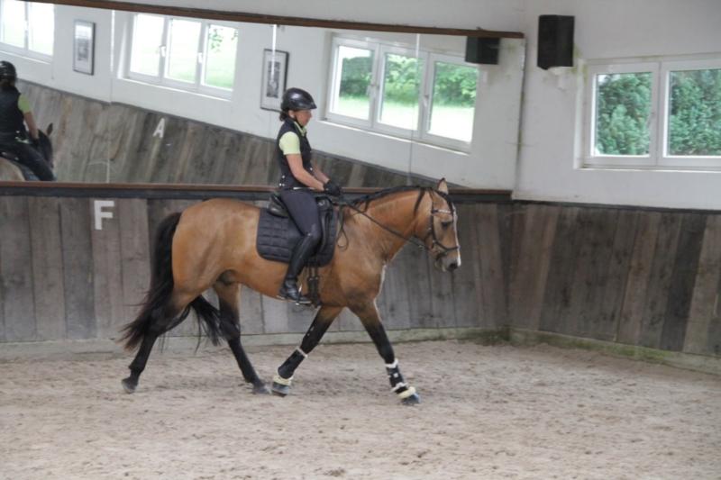 p-r-e--hengst-5jahre-158-cm-falbe-dressurpferd-freizeitpferd-schaupferd-working-equitation-roth-2267509_1