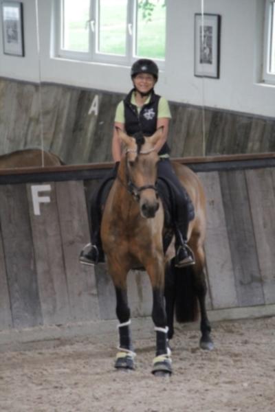 p-r-e--hengst-5jahre-158-cm-falbe-dressurpferd-freizeitpferd-schaupferd-working-equitation-roth-2267509_2