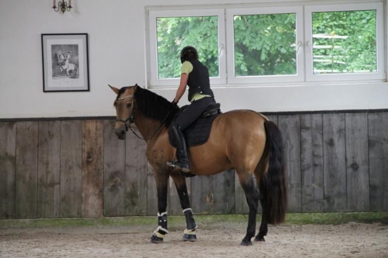 p-r-e--hengst-5jahre-158-cm-falbe-dressurpferd-freizeitpferd-schaupferd-working-equitation-roth-2267509_3