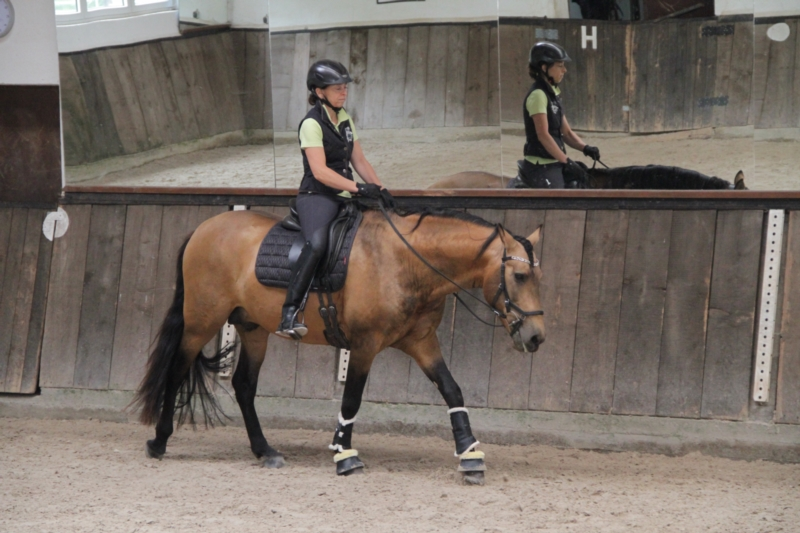 p-r-e--hengst-5jahre-158-cm-falbe-dressurpferd-freizeitpferd-schaupferd-working-equitation-roth-2267509_4